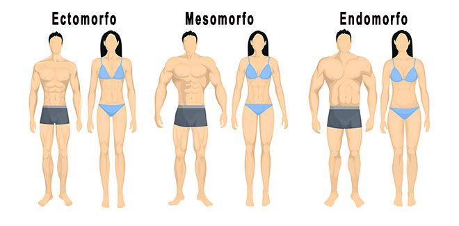Tipos de cuerpo endomorfo ectomorfo mesomorfo